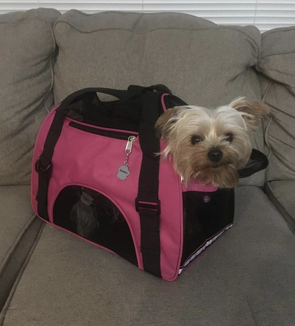 A small yorkie is sitting inside a hot pink carrier with its head popping out one of the openings
