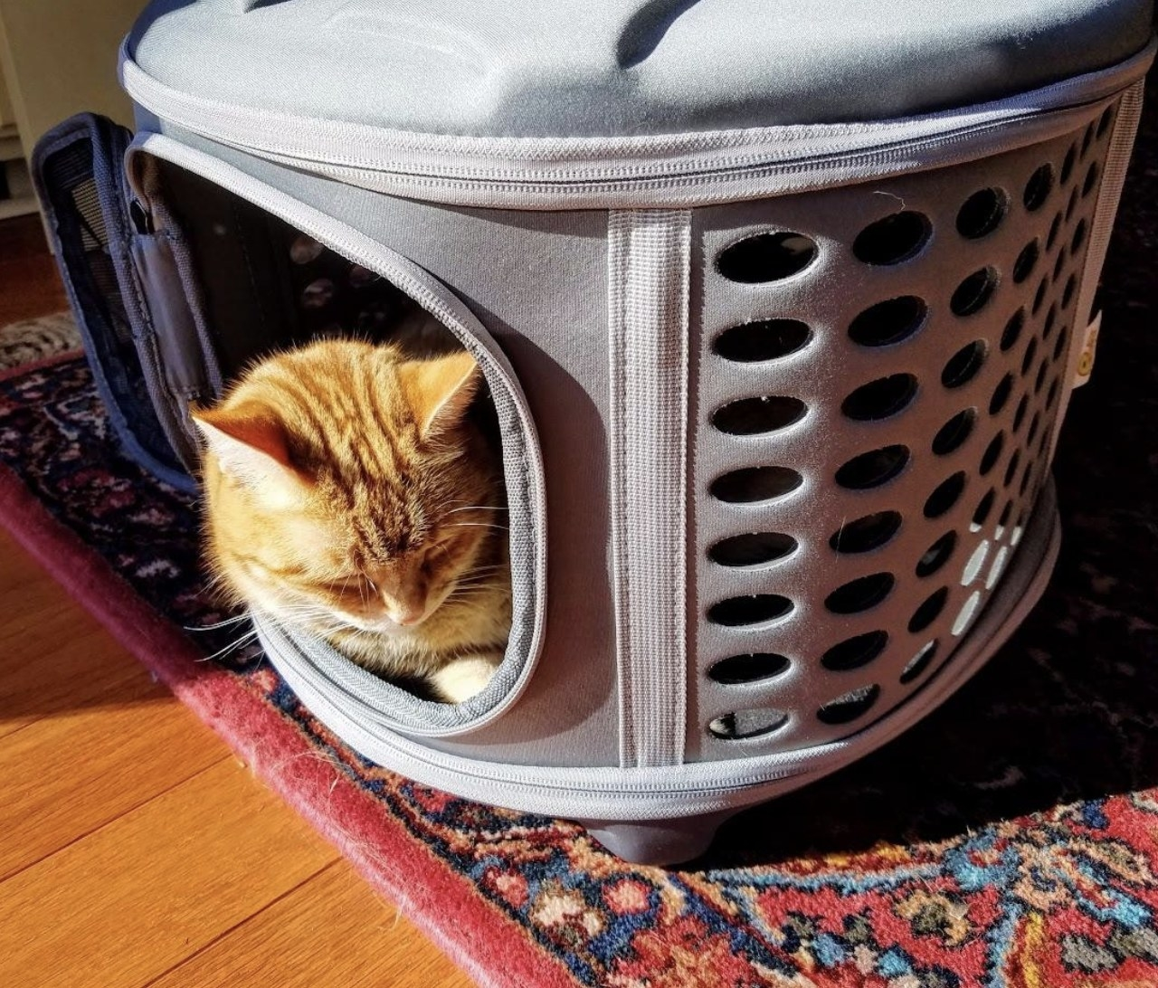 An orange cat naps inside a hardcover carrier with the side door open and their head sticking out