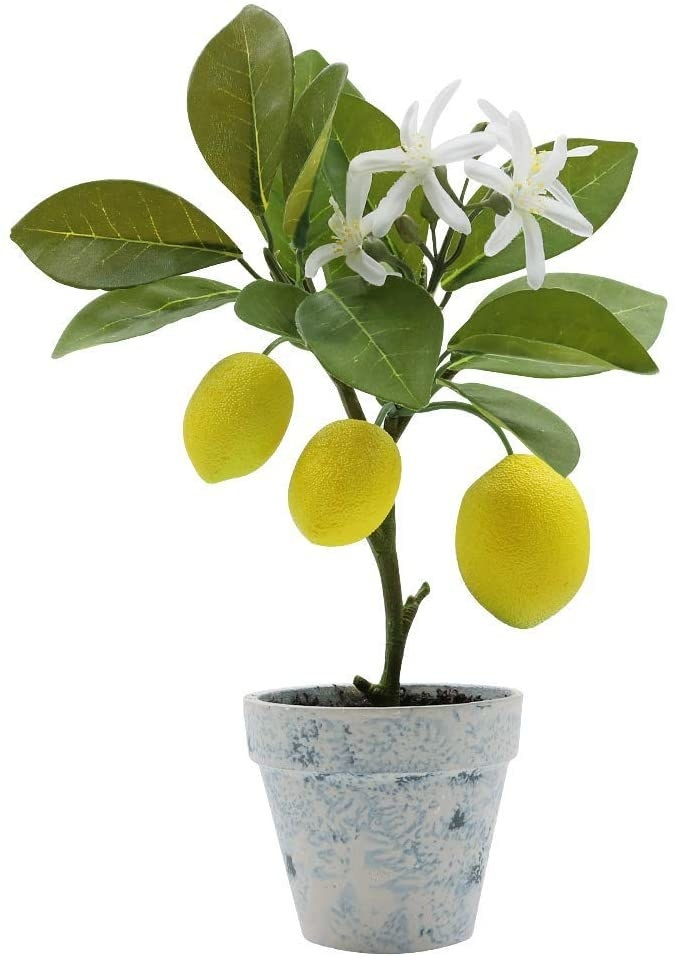 The fake lemon tree in a pot