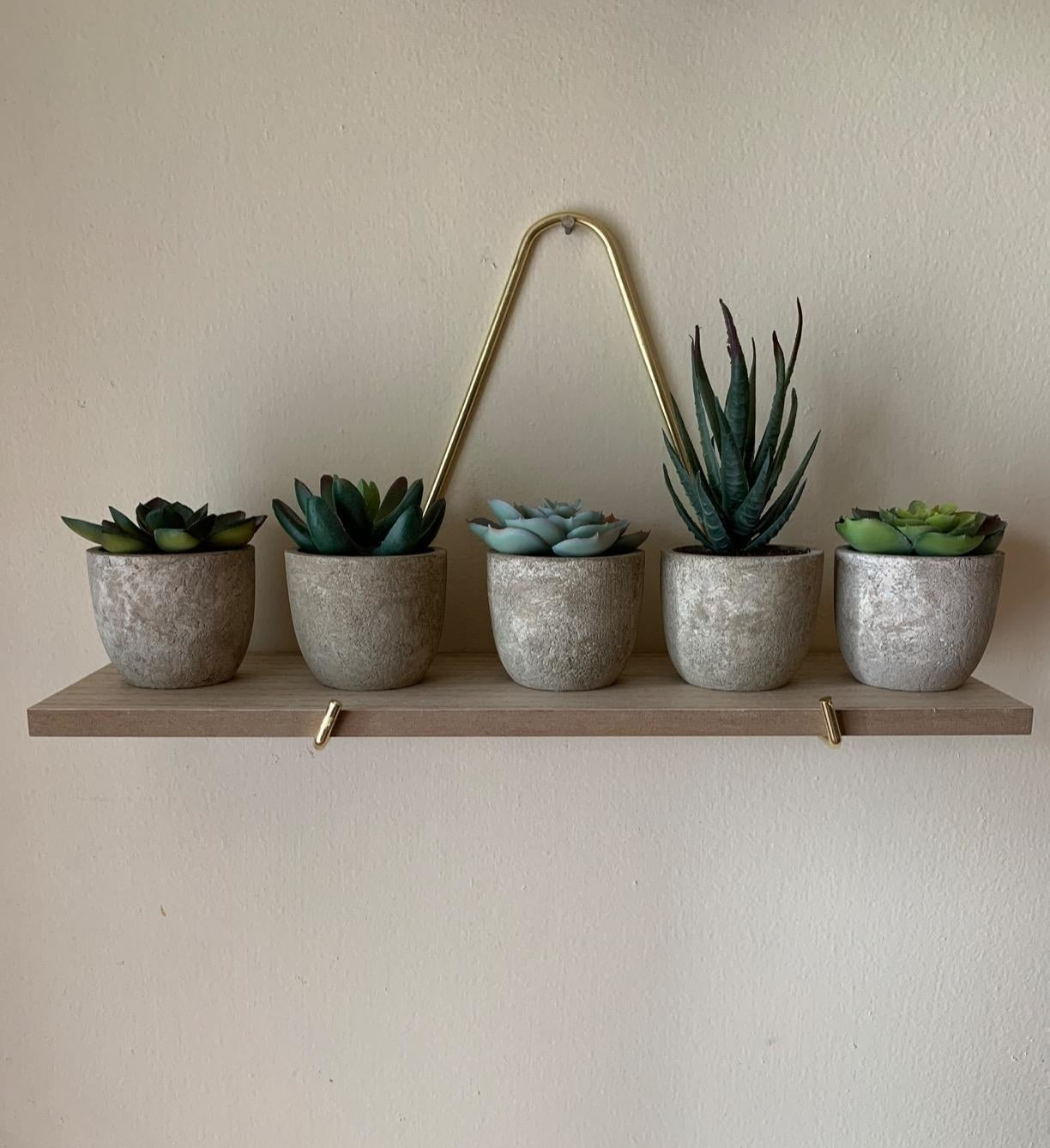 Set of five succulents in pots sitting on a wooden shelf