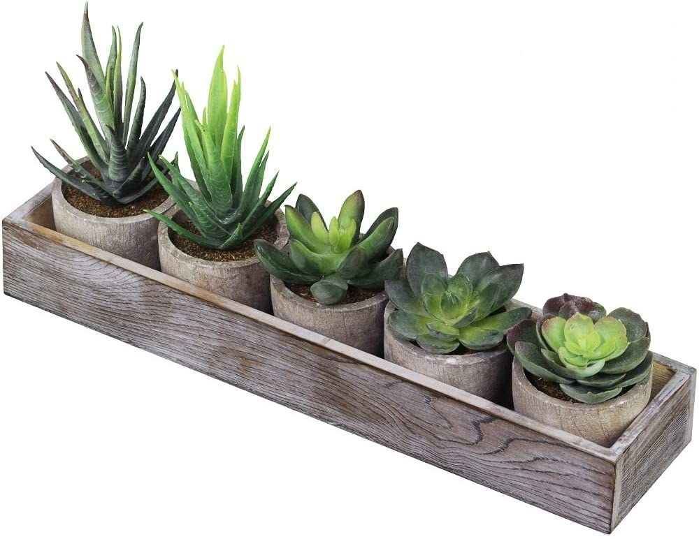 The fake succulents in their wooden box