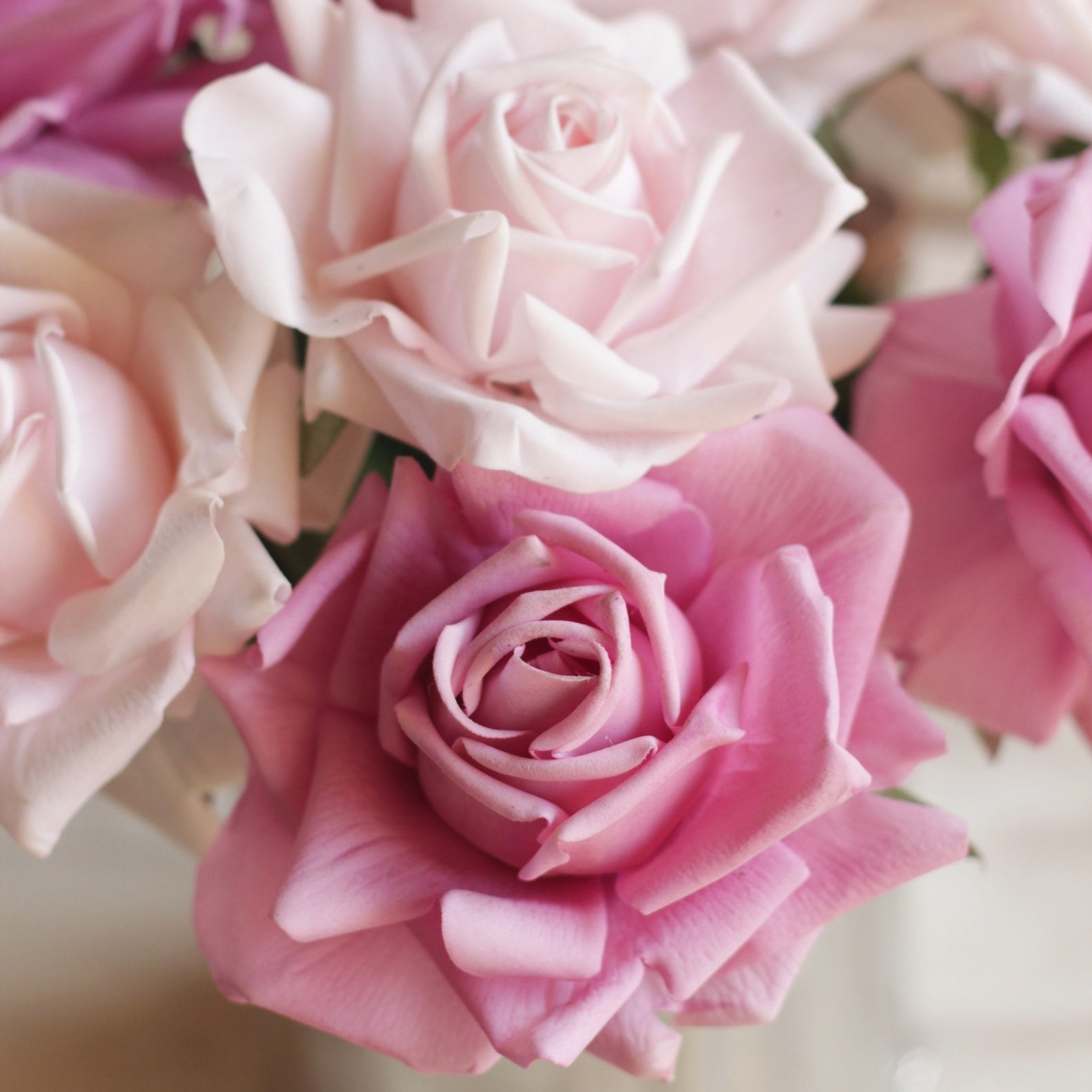 A closeup of the fake roses in light pink and rose pink