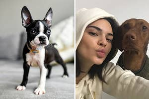 Small dog and Kendall Jenner and a dog.
