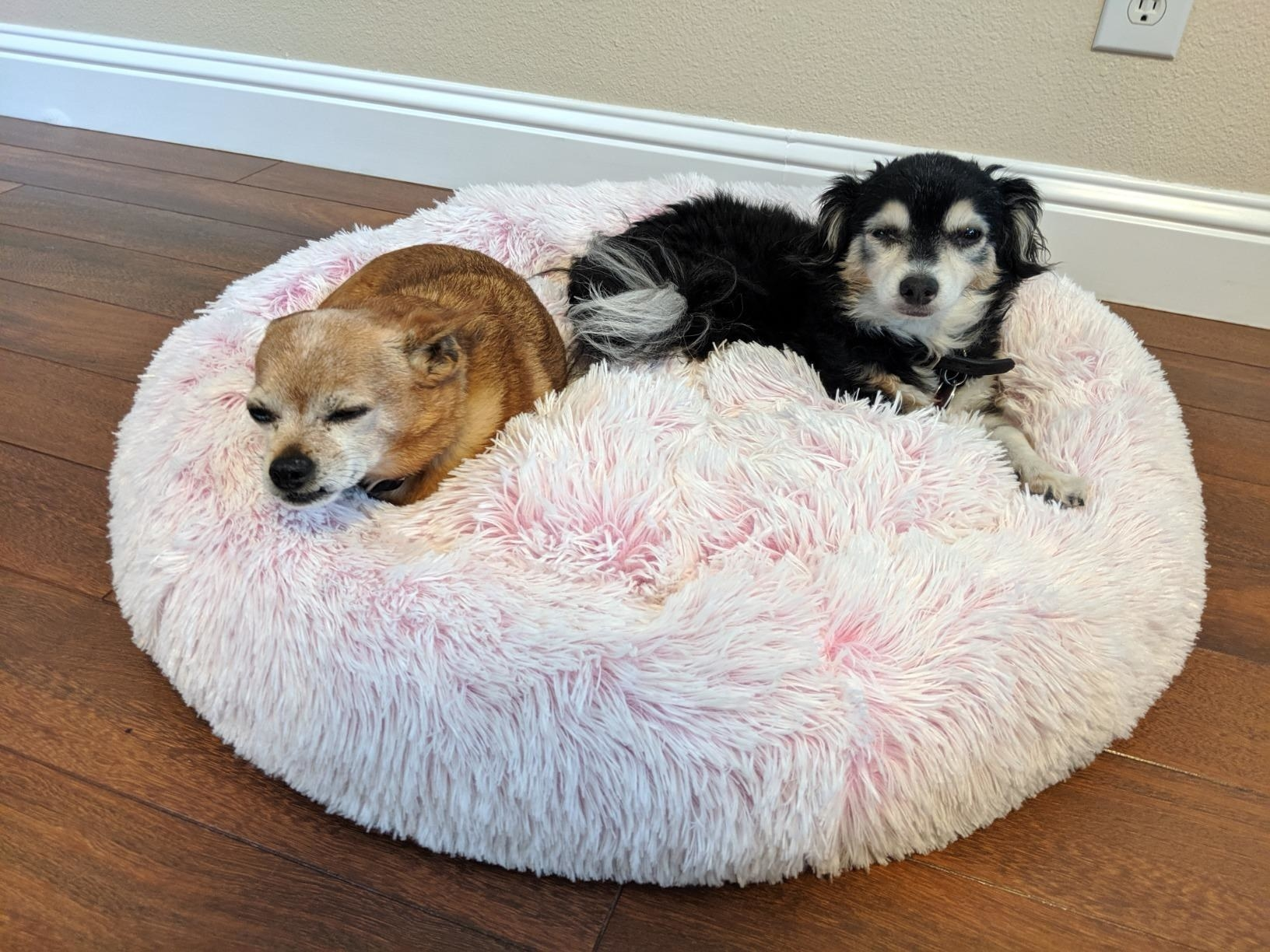 The large round pink faux fur bed, with two small dogs sitting comfortably inside