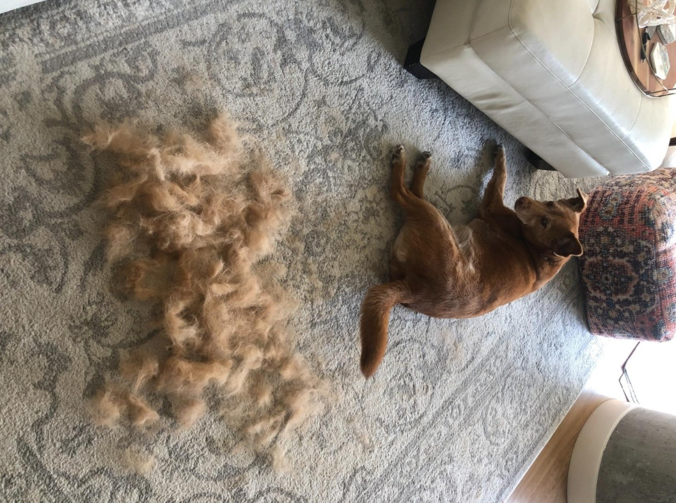 The reviewer showing a large clump of her dog's hair that the vacuum collected