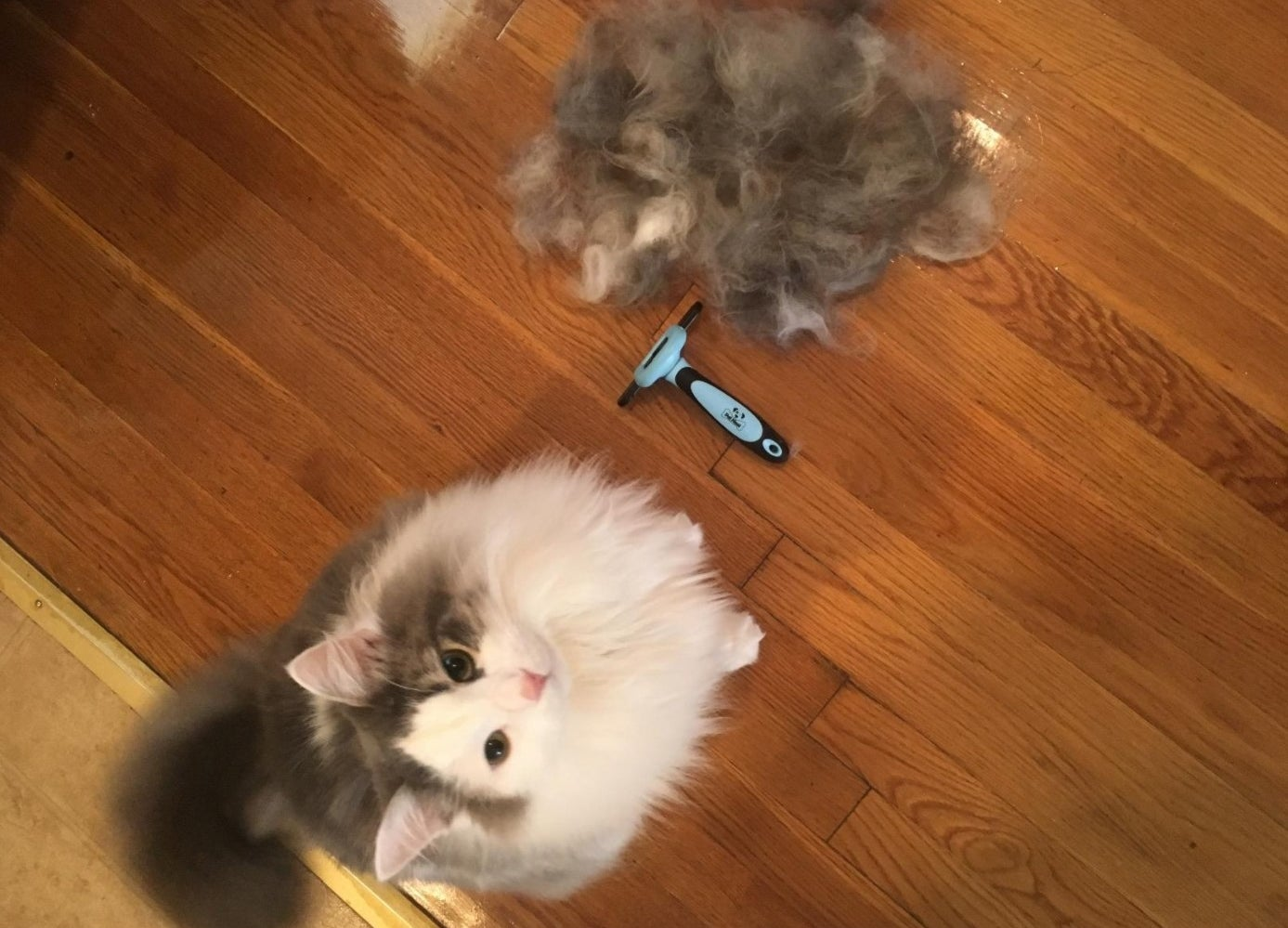 reviewer showing the hair removed from their cat after brushing