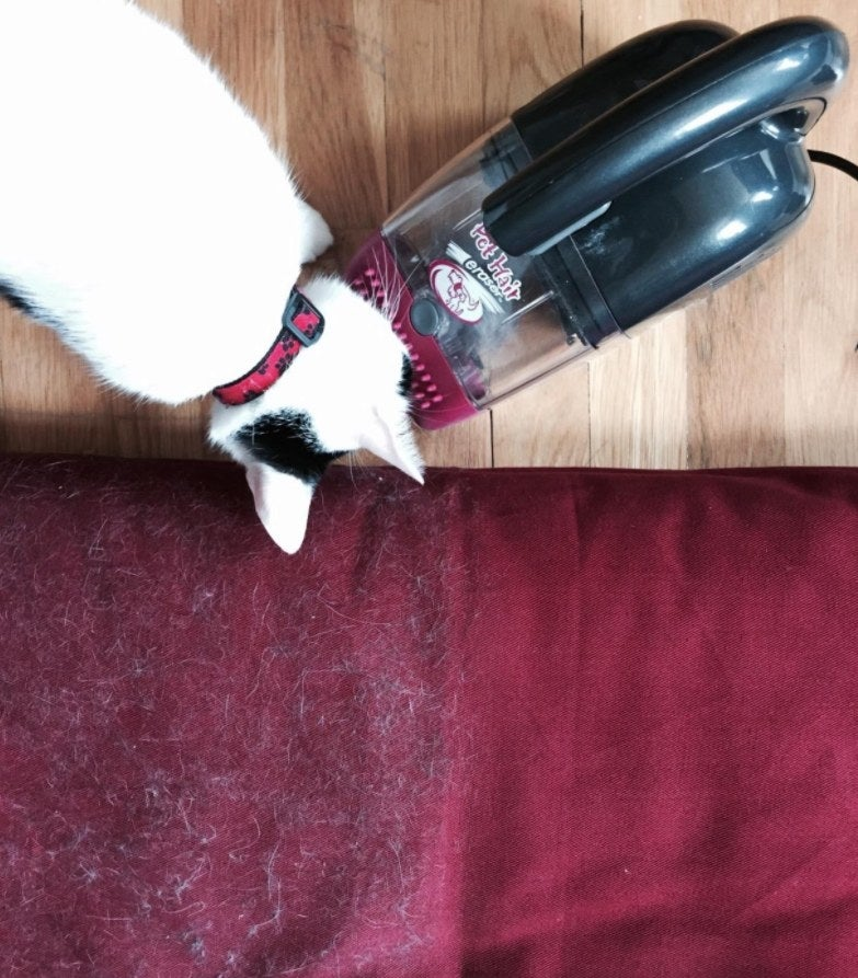half of the reviewer's pillow cleaned of cat hair after using the vacuum