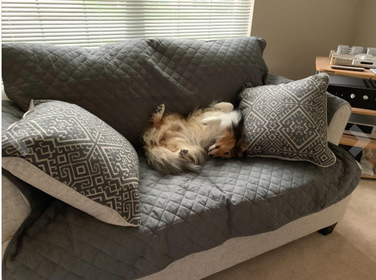 reviewer's dog lying on top of the couch cover