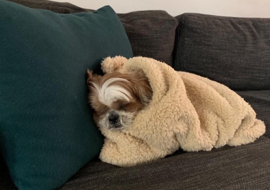 The reviewer showing their dog wrapped in the pet blanket