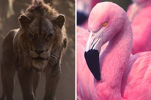 "Scar from the live-action ""Lion King"" is on the left with an evil looking flamingo on the right"
