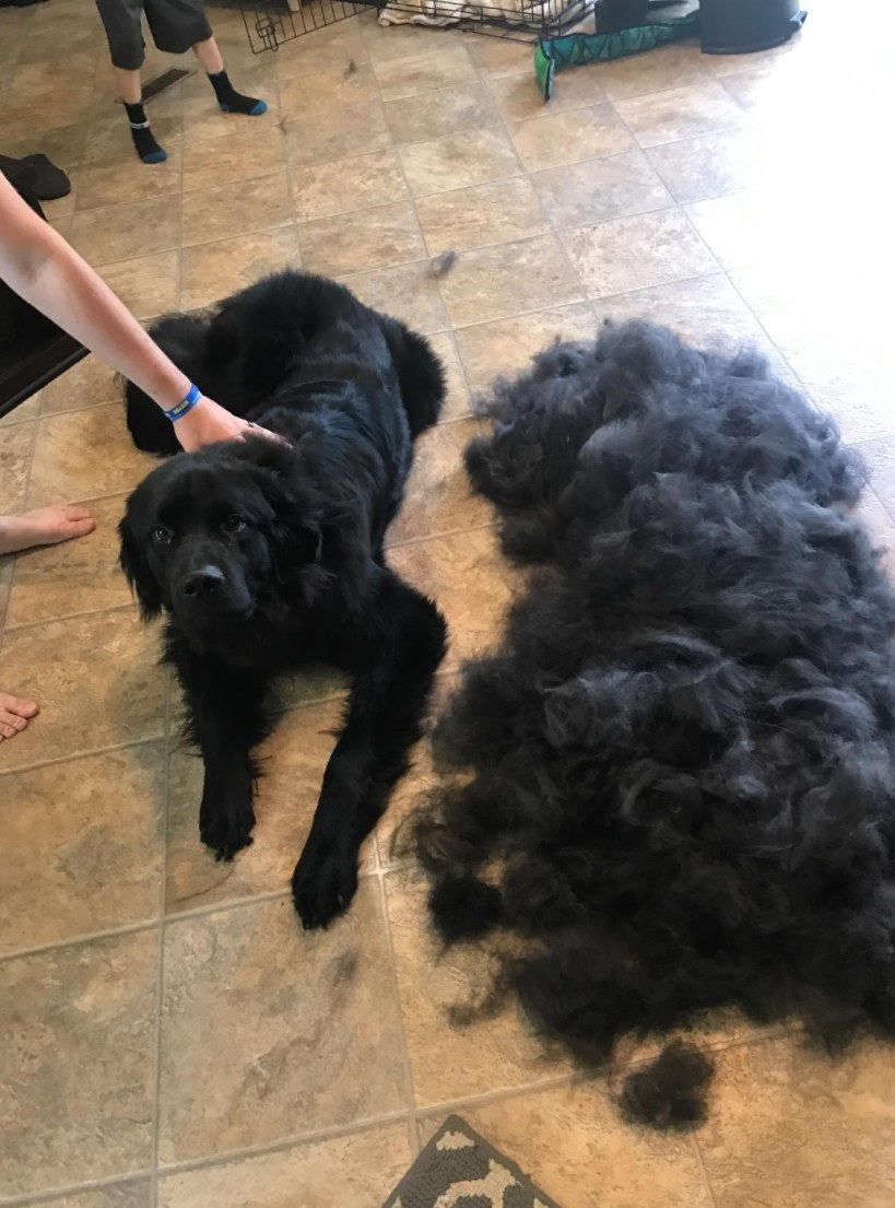 reviewer showing the pile of hair that came off of their dog after using the brush