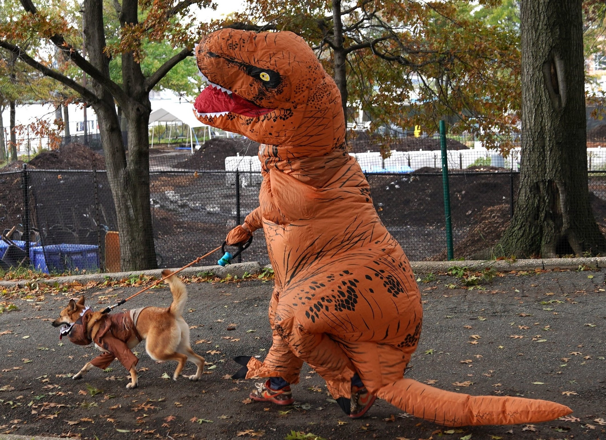 happy dog being walked by their owner, the owner is wearing a funny dinosaur costume