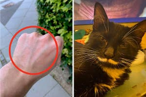 """A guy's veins on his hand reading """"hi"""" and a cat with a mustache"""