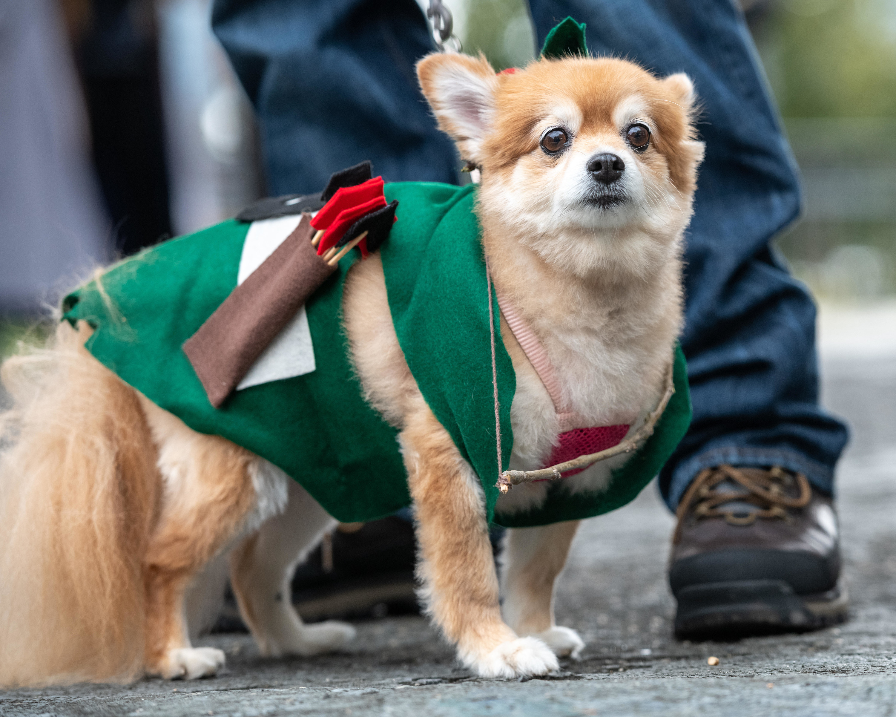 a dog dressed as robin hood in sweater form
