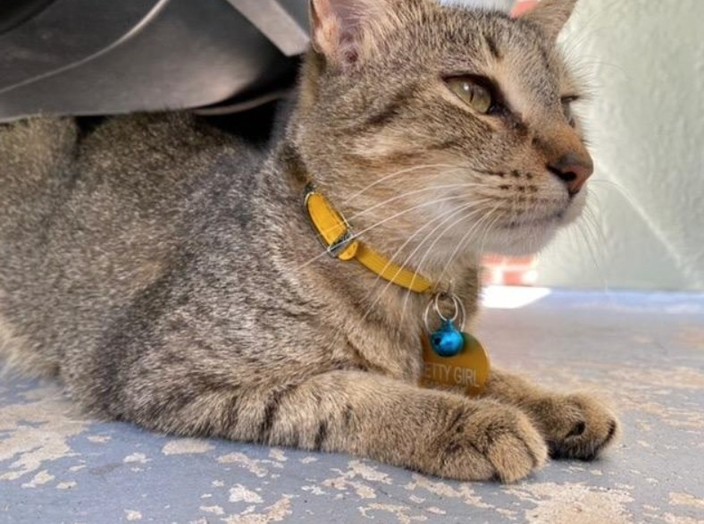 A cat with a bright yellow collar and tiny blue bell