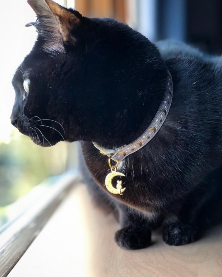 A black cat looks out a window while wearing a moon themed color with a crescent moon charm