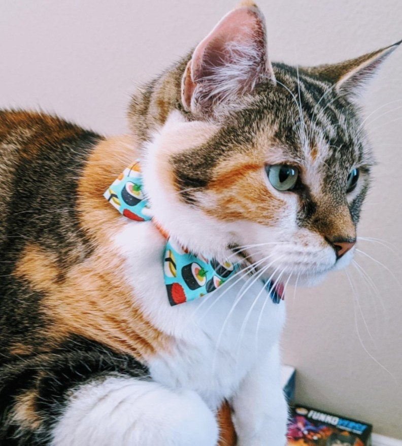 A cat sits with a sushi print bowtie collar