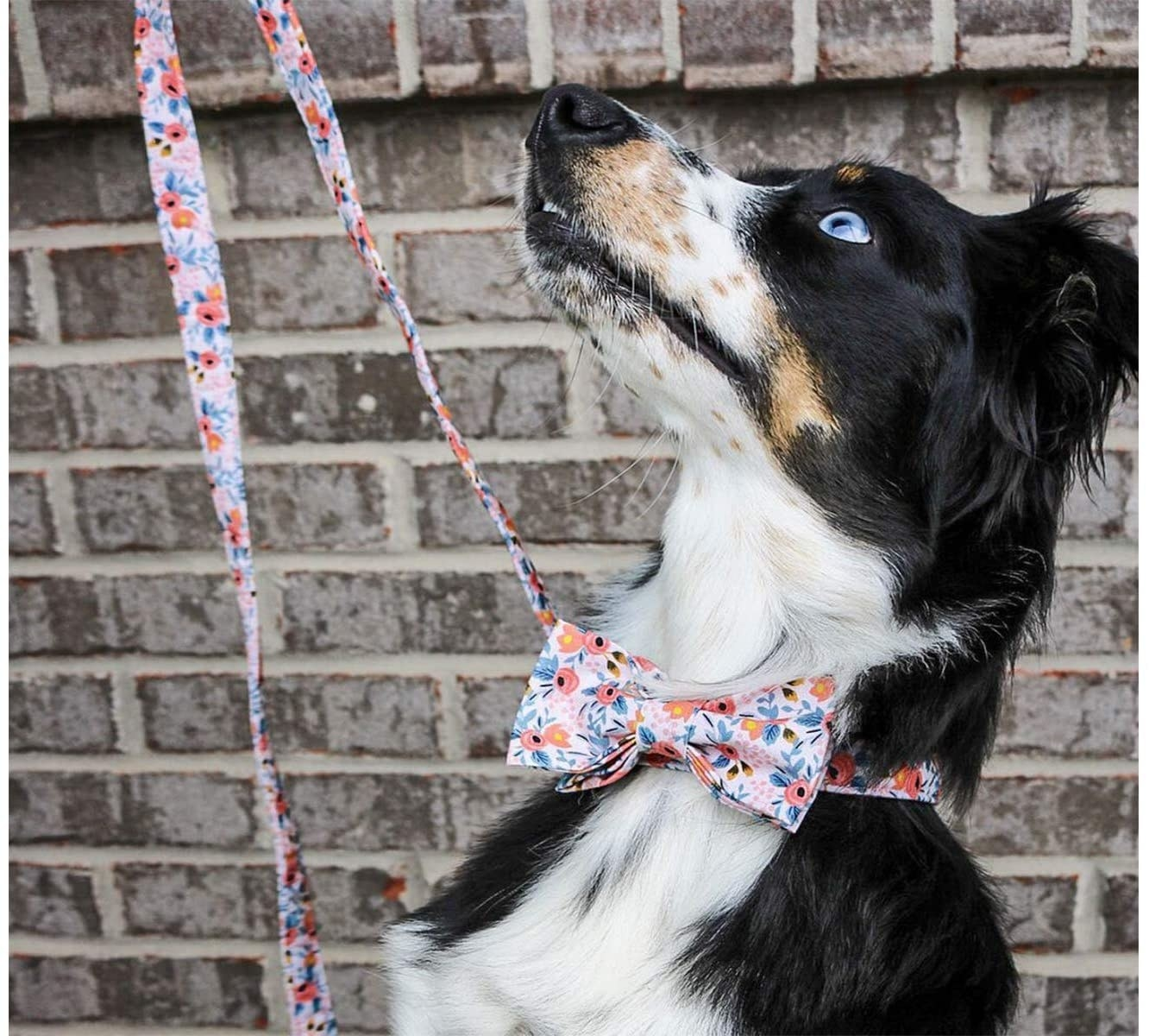 A dog wearing a pink floral bowtie collar and matching leash