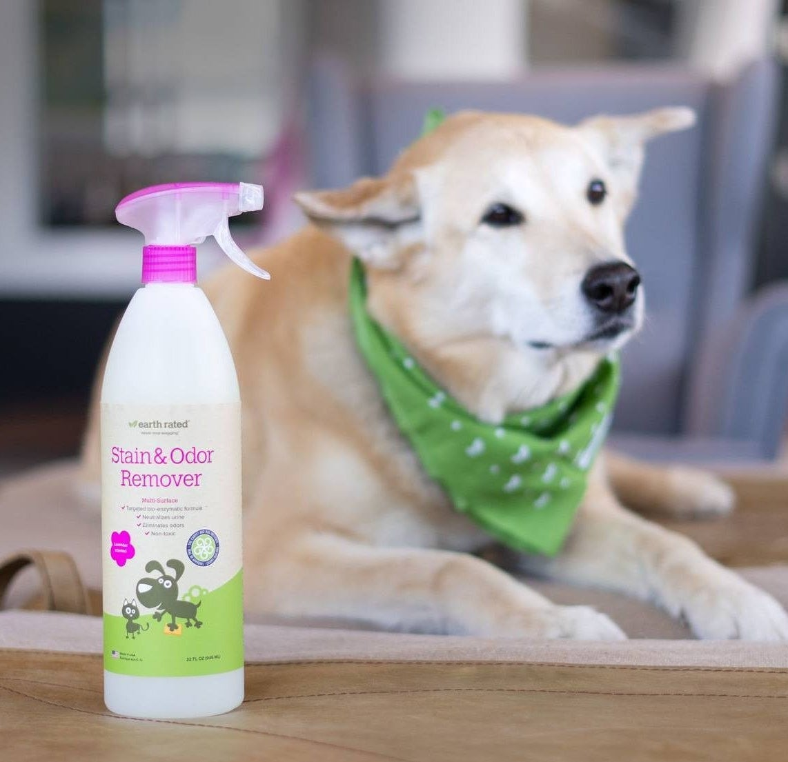 The pet stain and odor remover