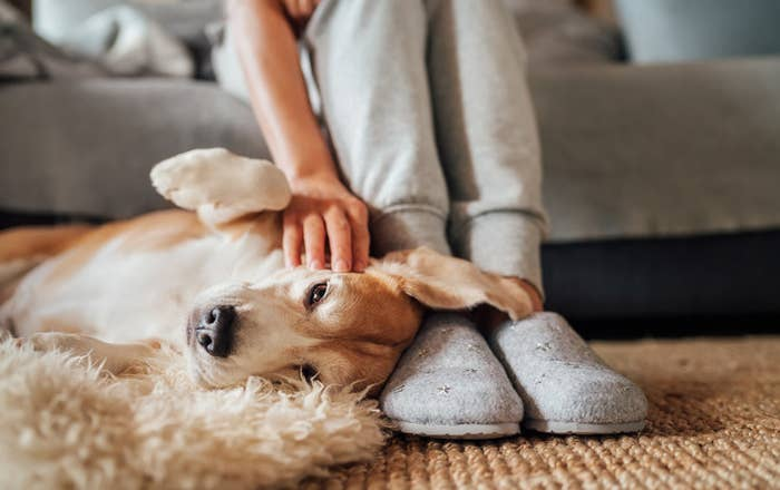 A dog lies at its owners feet getting a head scratchy