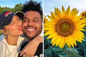 Bella Hadid and Abel and a sunflower.