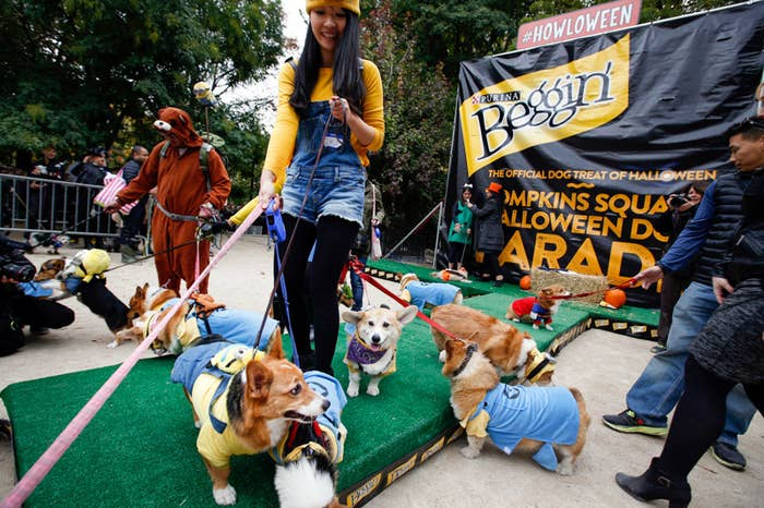 a bunch of corgis dressed in costumes at the park for halloween