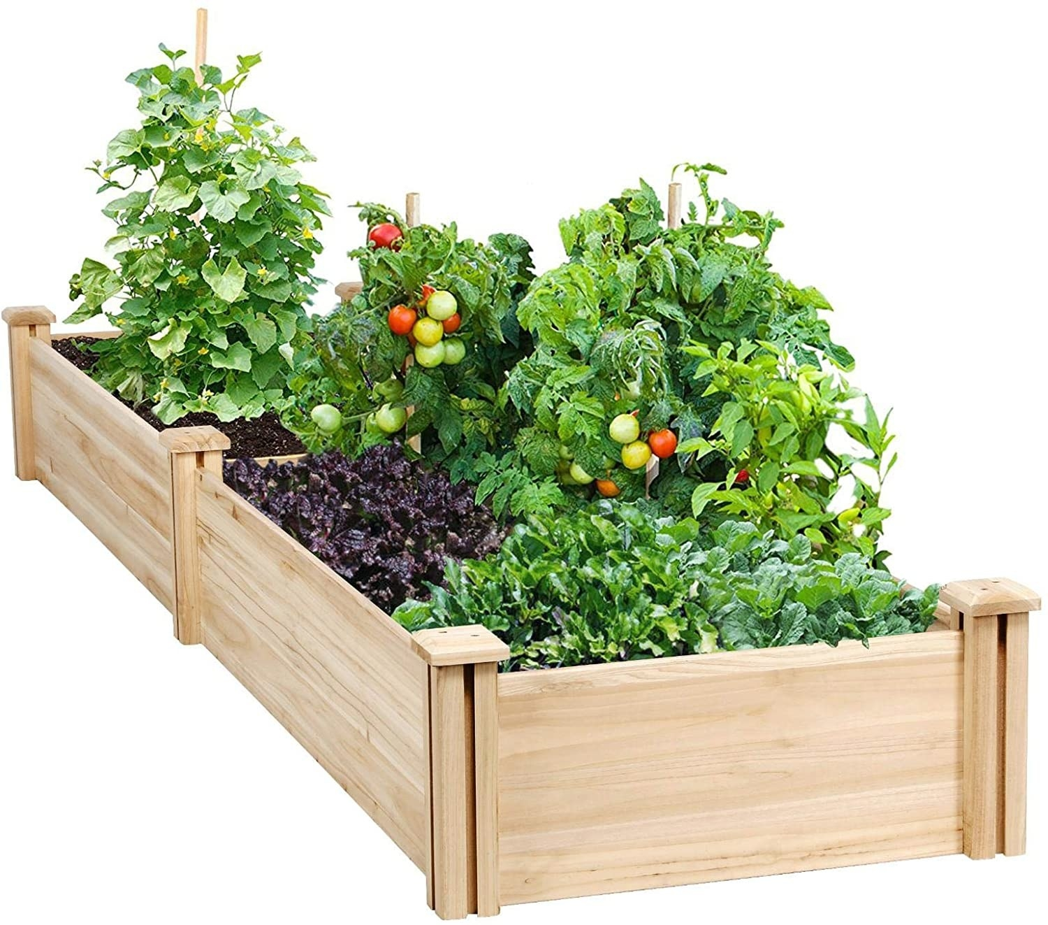 A raised wooden garden bed with tomatoes and fresh herbs.