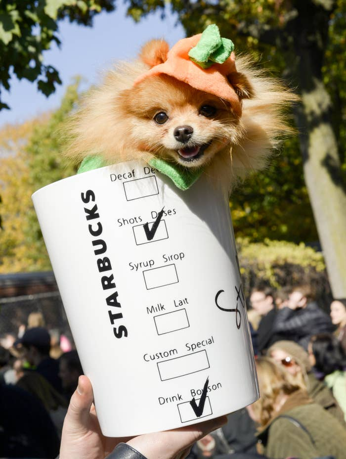 a fake starbucks cup with a Pomeranian's head sticking out the top