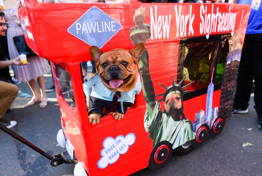 small dog dressed as the statue of liberty in their tiny bus to resemble the new york sightseeing tours