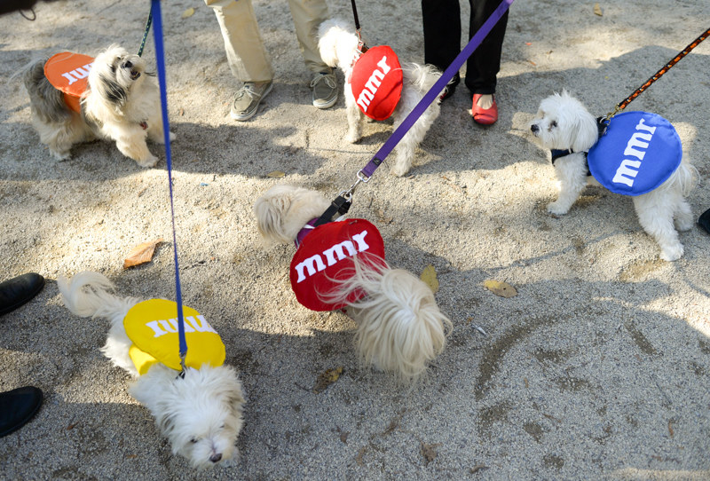 a group of dogs at the park with m&m sweaters