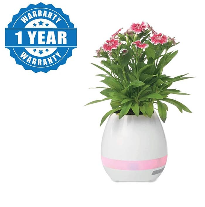 A flowerpot that has an LED ring lit around it and has a plant growing in it