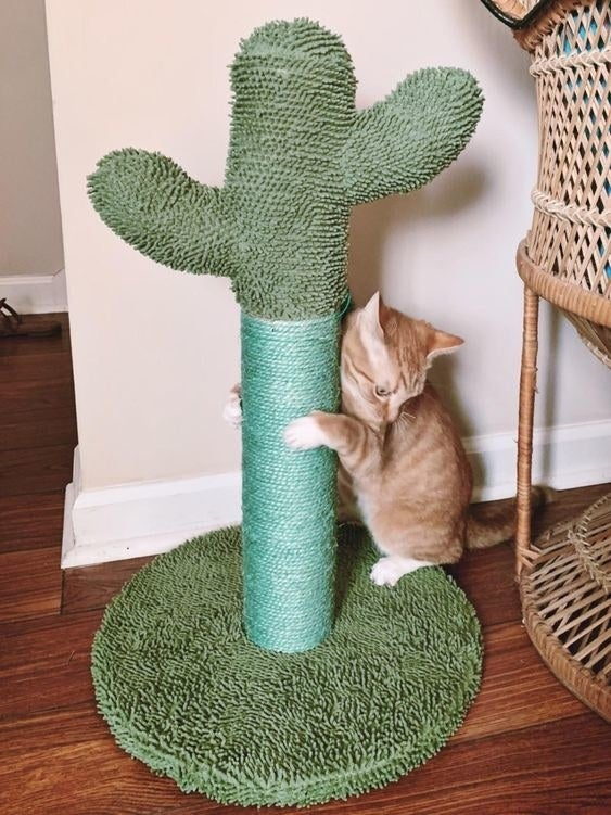 Cat using the scratching post