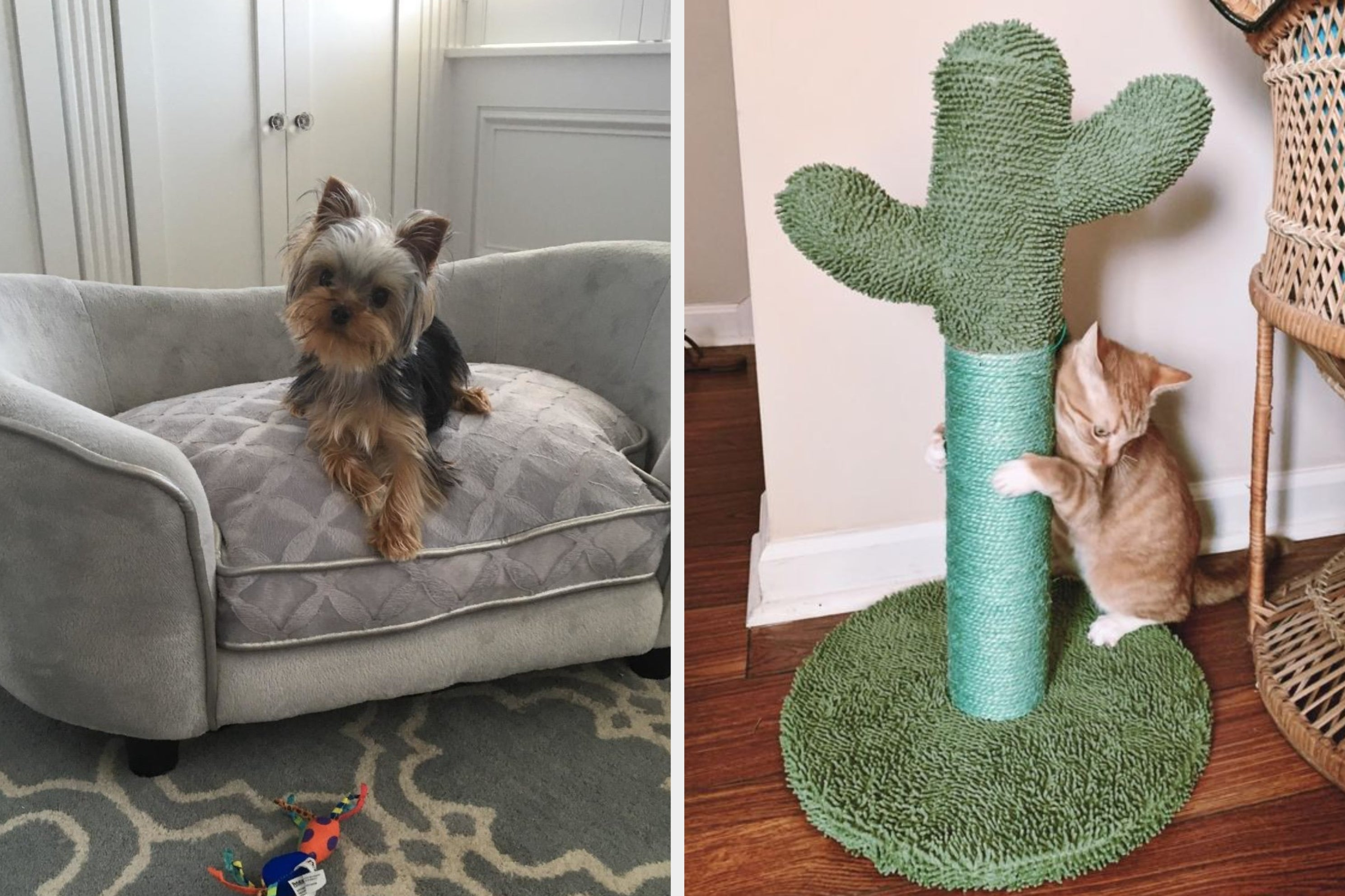 25 Pet Products From Amazon That'll Basically Function As Decor