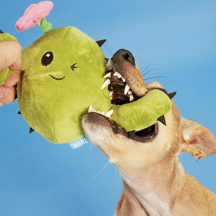 A dog chewing on a green plush cactus toy