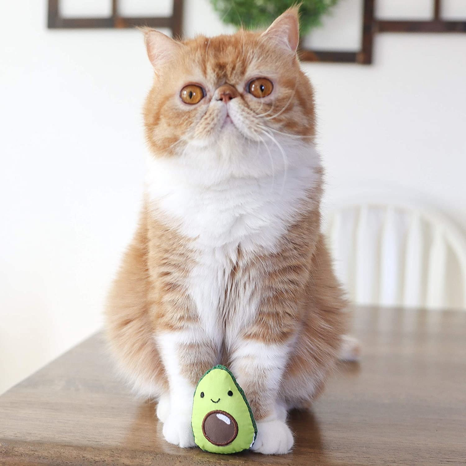 An orange and white cat with a stuffed green and brown avocado in front of it