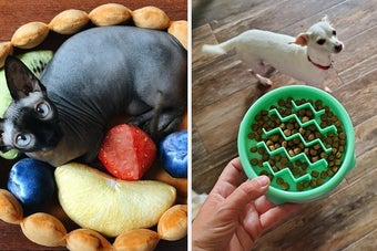 Side by side of hairless cat in fruit tart bed and mint green ridged slow feeder filled with kibble