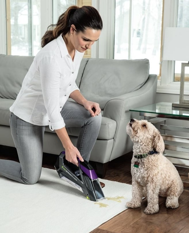 Using the purple carpet cleaner to clean a spot off cream-colored carpet
