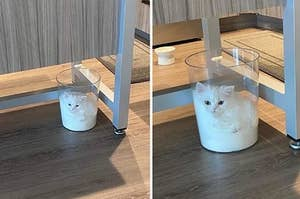 Cat sitting in a clear trash can, looking like it's melting