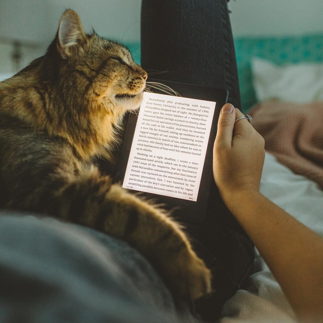 A cat rubbing its face against a Kindle