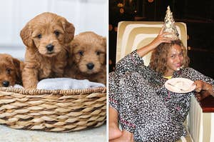 Puppies and Beyonce celebrating.