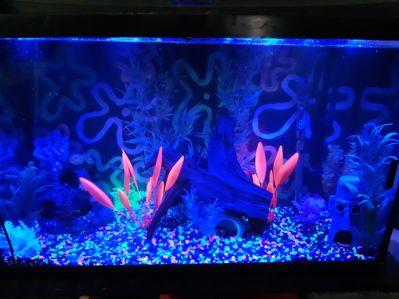 Reviewer's fish tank with neon gravel, glowing under LED lights