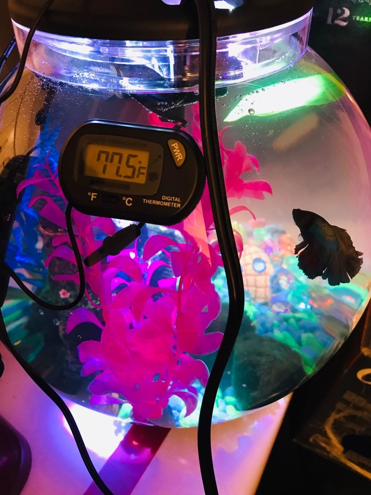 Reviewer's small fish bowl with a fish inside and the thermometer mounted on the outside