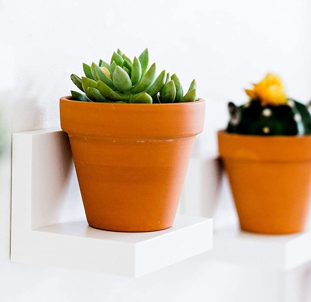 Two Command shelves holding potted plants