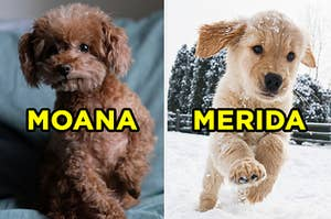 """On the left, a sweet poodle puppy sits on a bed and """"Moana"""" is typed on top, and on the right, a golden retriever puppy jumps in the snow and """"Merida"""" is typed on top"""