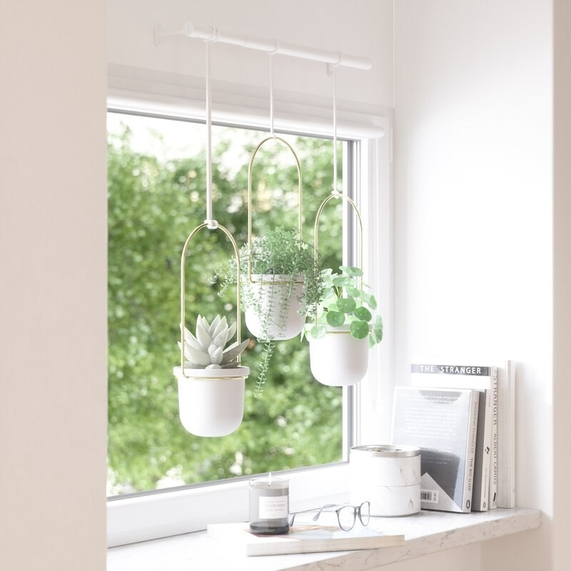 A set of three white planters with brass handles hanging from a white bar in a window