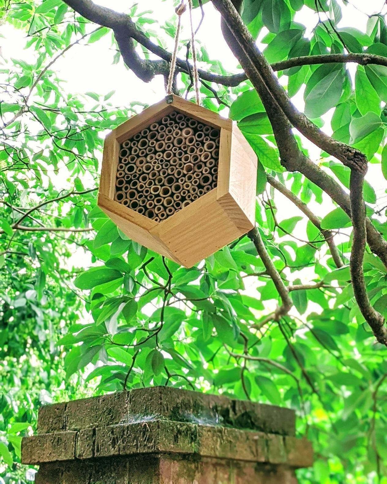 Reviewer photo of the bee house, which is made with pre-rolled tubes that give bees plenty of small places to nest
