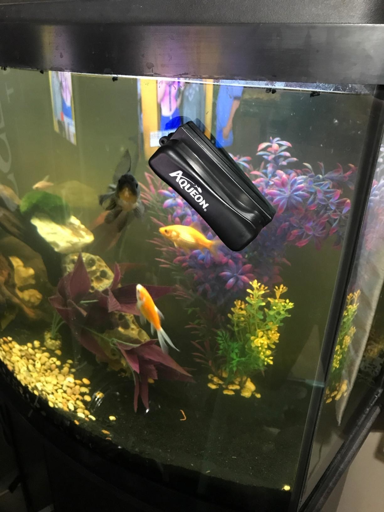 Reviewer's tank with the magnet cleaner attached to the side
