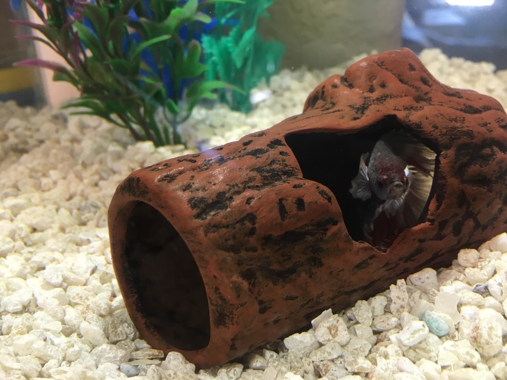 Reviewer's log in a full tank, with a fish playing inside it