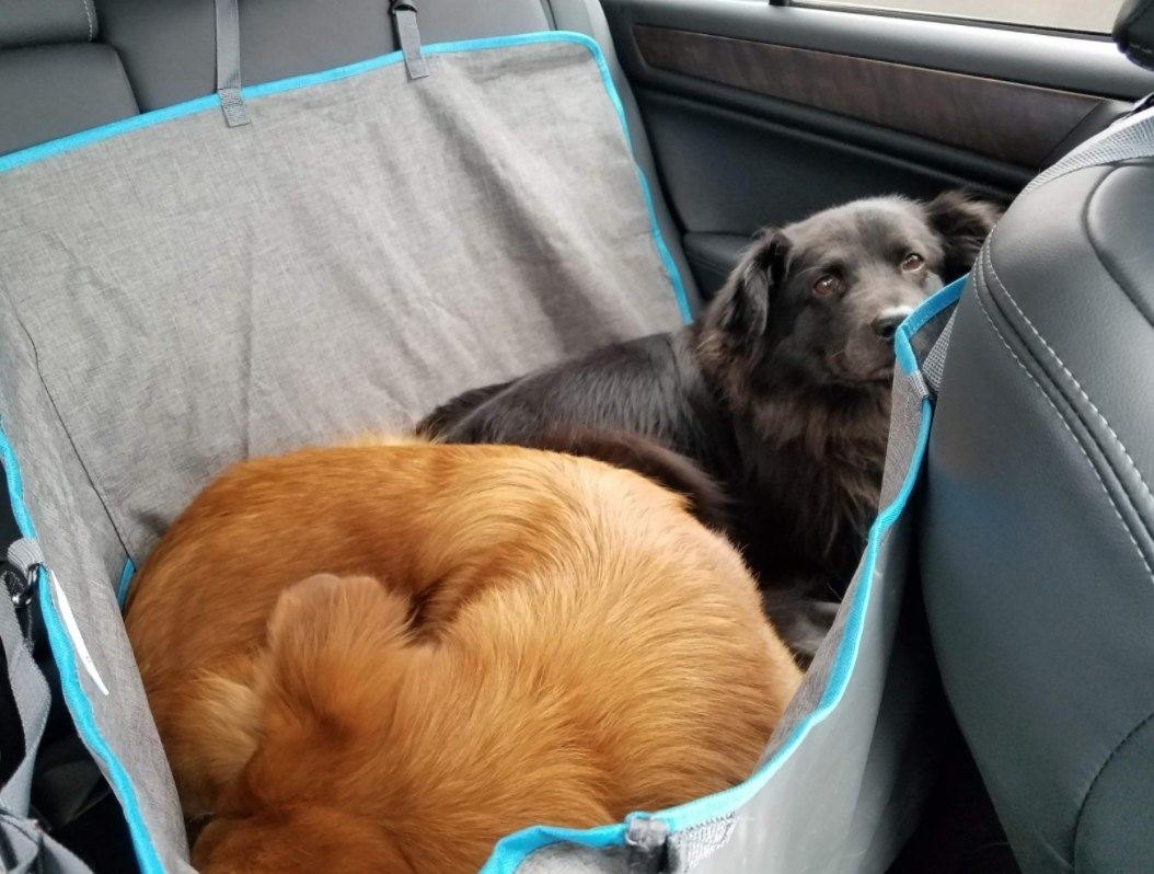 Reviewer's two dogs snuggled in the car within their hammock