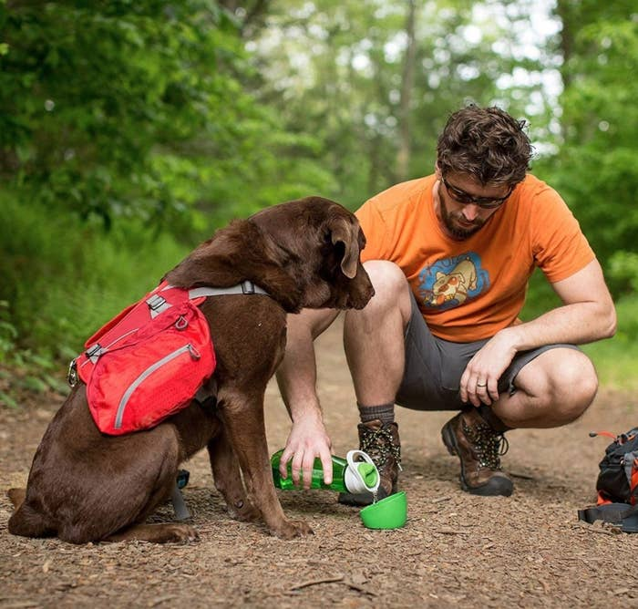Dog drinking from water bottle in the woods
